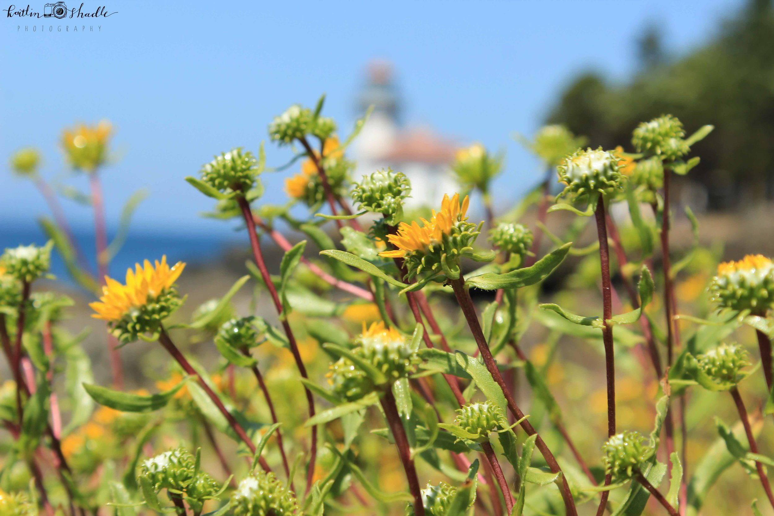 Flowers and Lighthouse