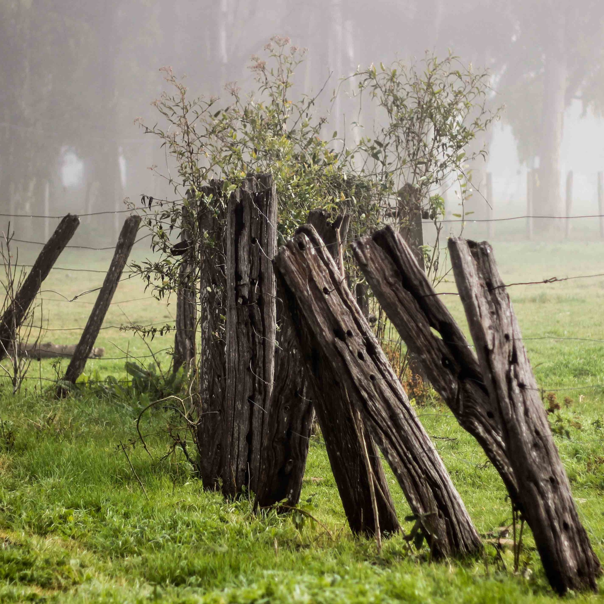 Fog and Fence Posts