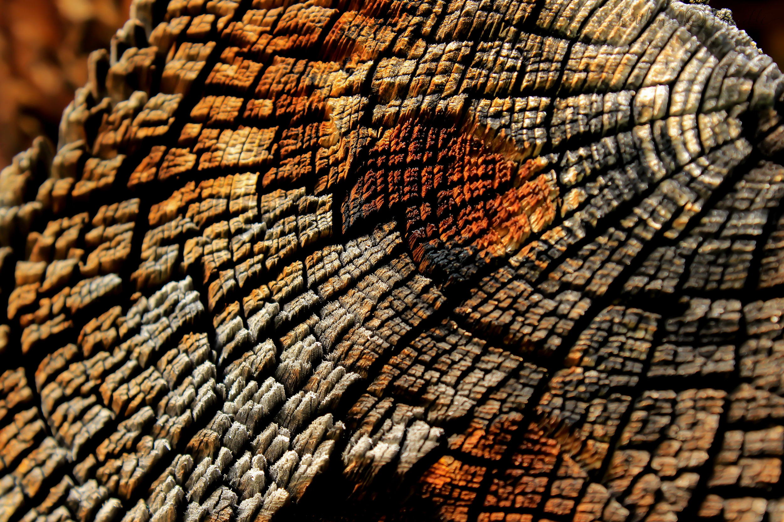Weathered Wood