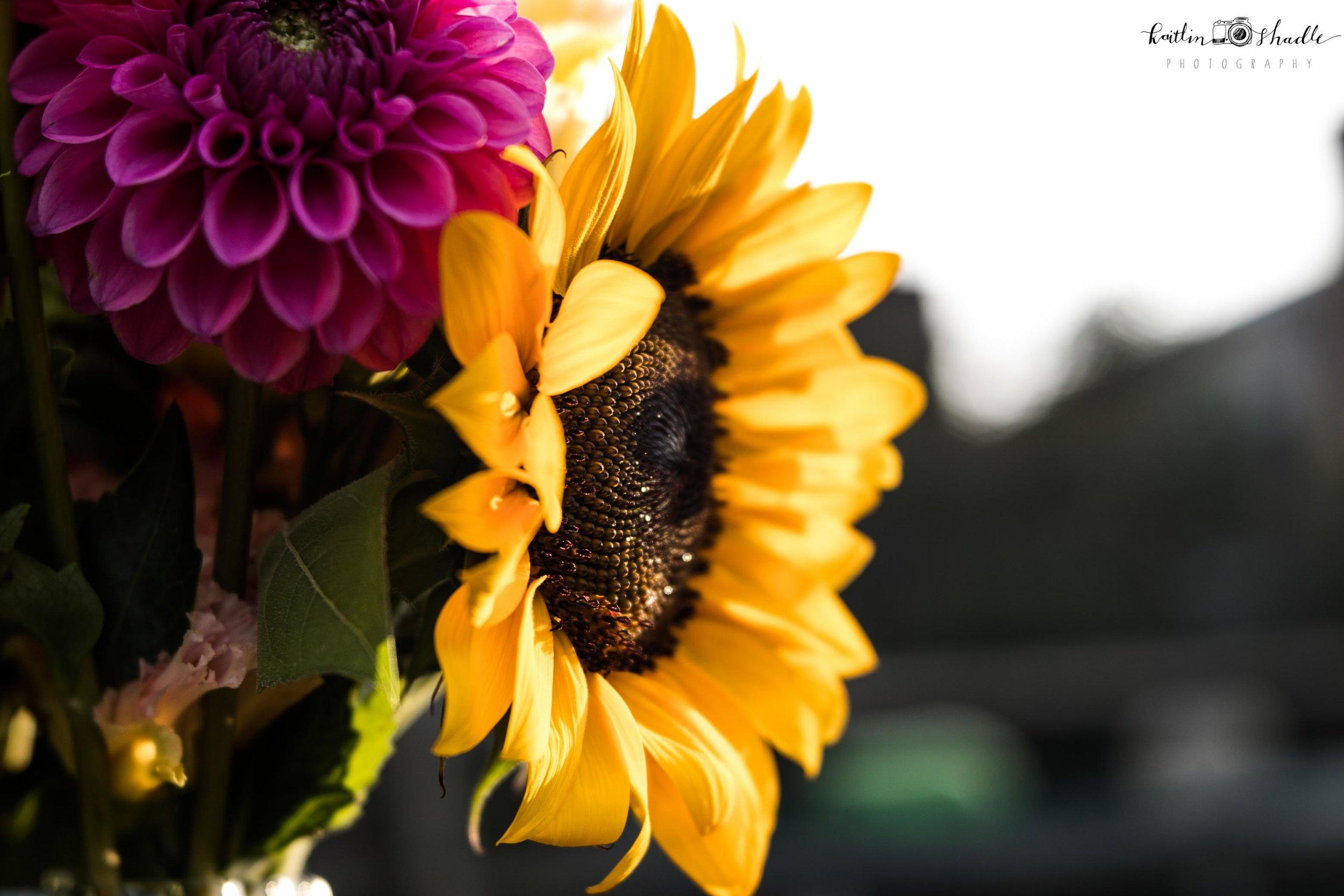 Sunflower in Macro