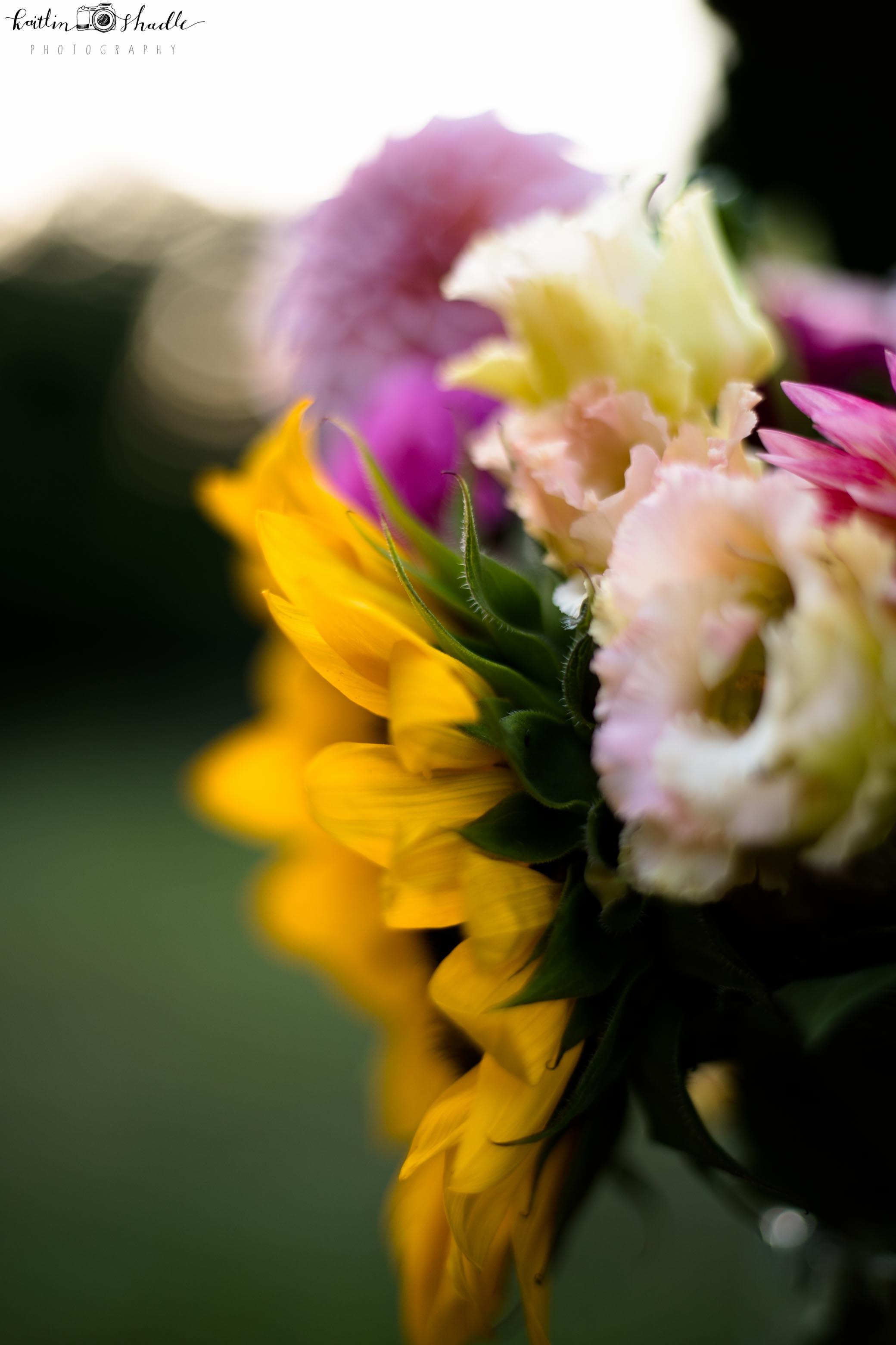 Freelensing the Sunflower