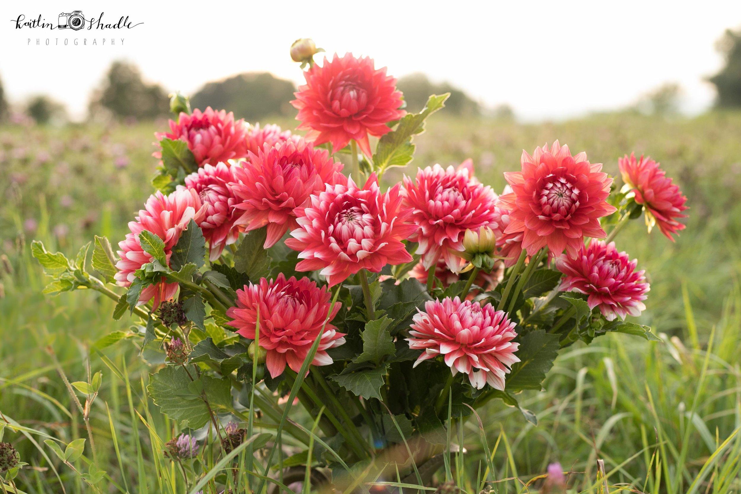 Cut Flowers in the Field