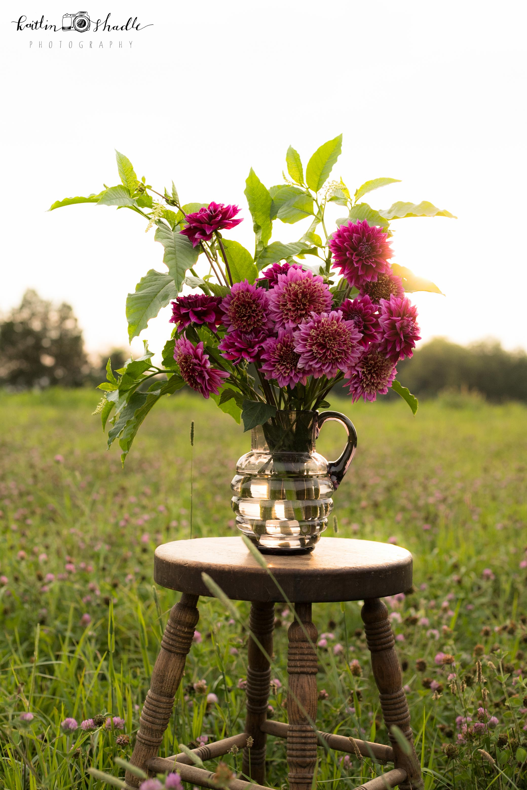 Mambo and Arabian Dahlias with Golden Glow