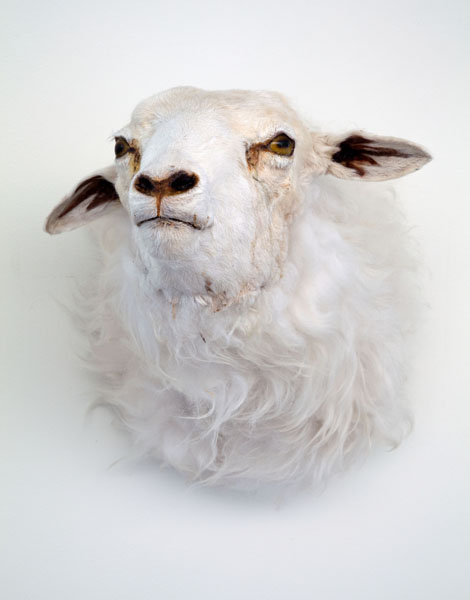 Cold Hands, Warm Heart (detail), 2009. mixed media, water pump, water, taxidermy sheep