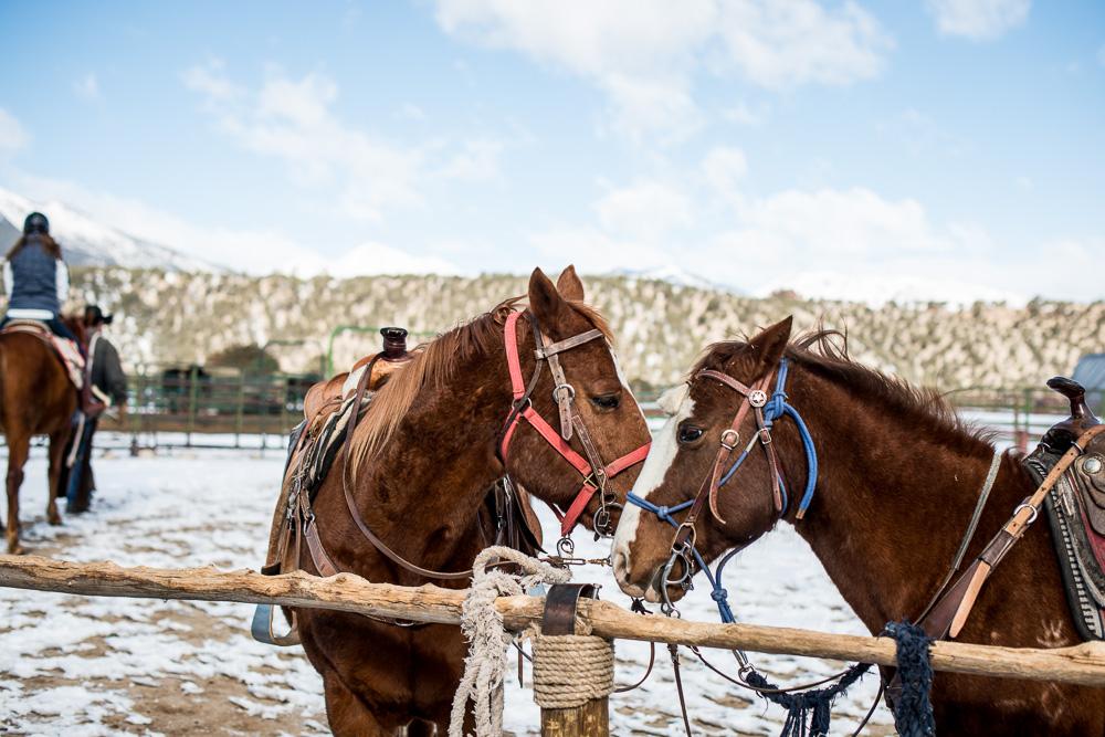 Colorado 2013 Horseback Ride Blog Post-4.jpg