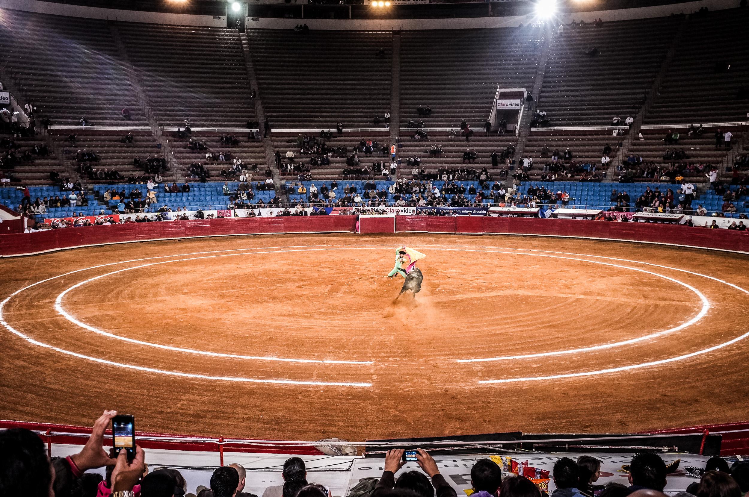 Bull Fight-14.jpg