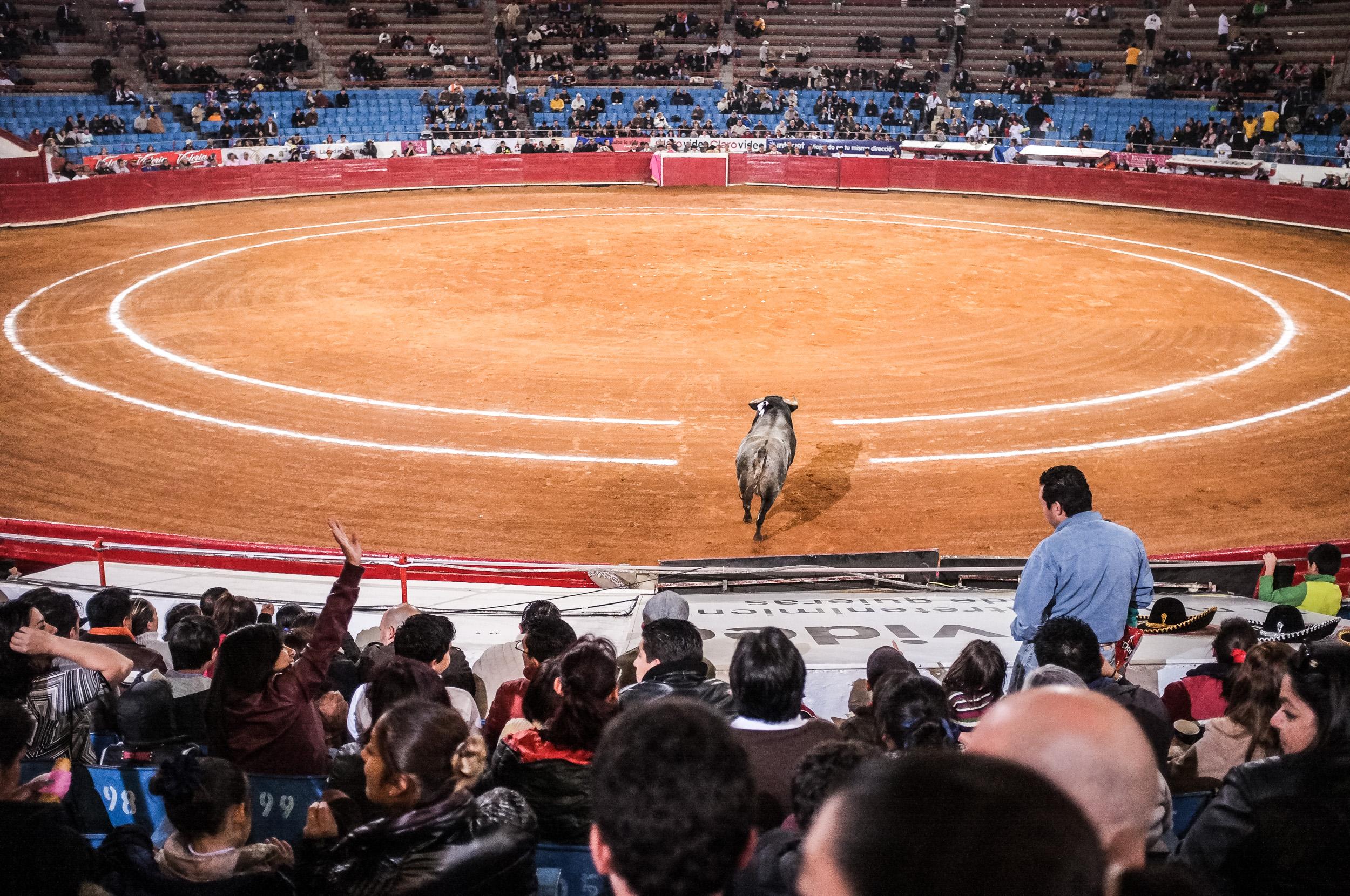 Bull Fight-23.jpg