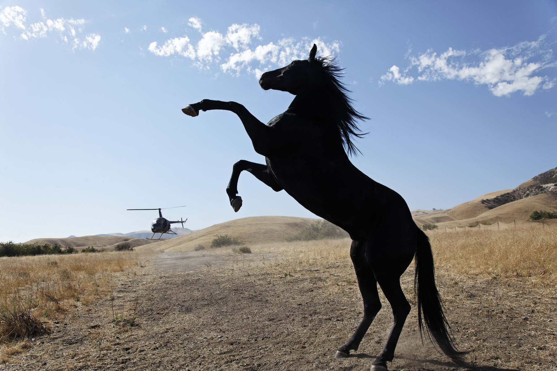 Wild Horses tells the story of Mills, an established photographer, who returns to her native Nevada following an urgent call from her grandmother informing her that a band of wild horses close to their hearts, faces government roundup.  Cruelty, courage, love and memory collide as two generations of women bear witness to the brutality common to wild horse roundups in the American West.  In this story, that spans one day, Mills is exposed to a complex issue and follows hear heart, choosing to ignore the consequences.