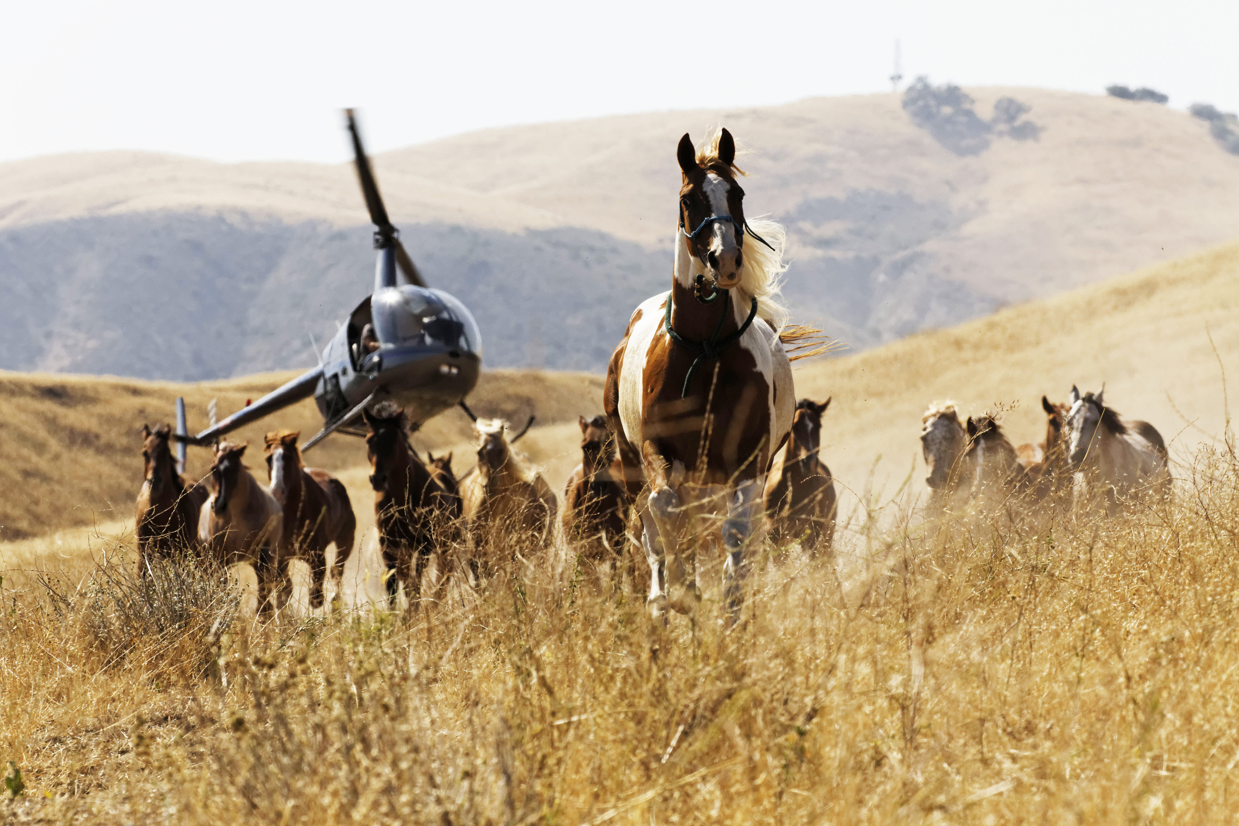 WILD HORSES is featured in TFF'14's Short Film Competition