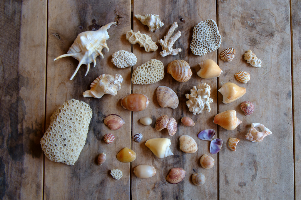 Collect a bag full of sea shells