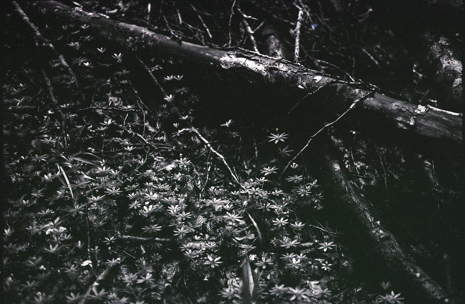 Umbra Means Shadow, Umbra Forest Floor, Italy
