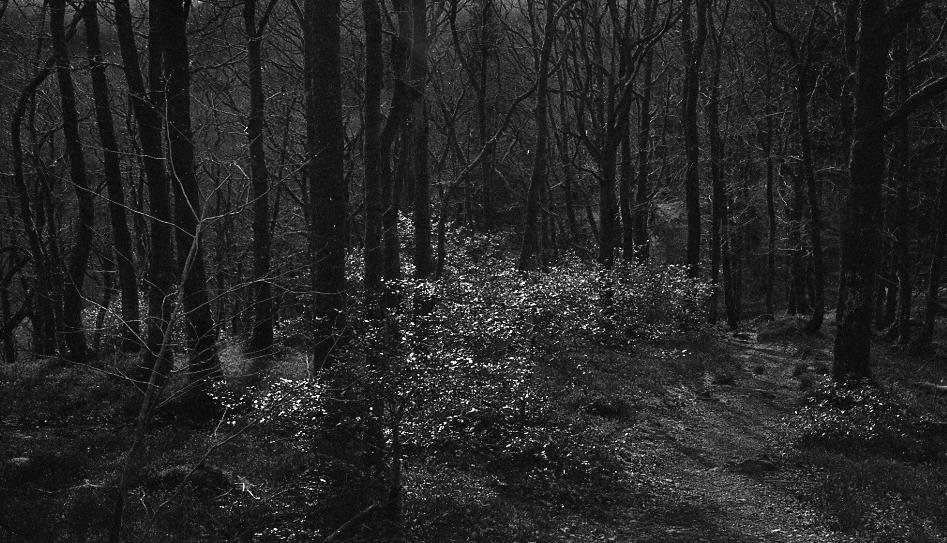 Doon Hill, Near the Fairy Tree, Scotland