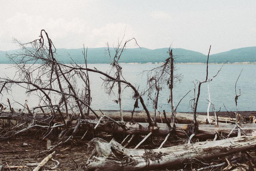 gaspesie-quebec-canada-gaspé-boom-reserve-driftwood-parc-forillon-plage-beach