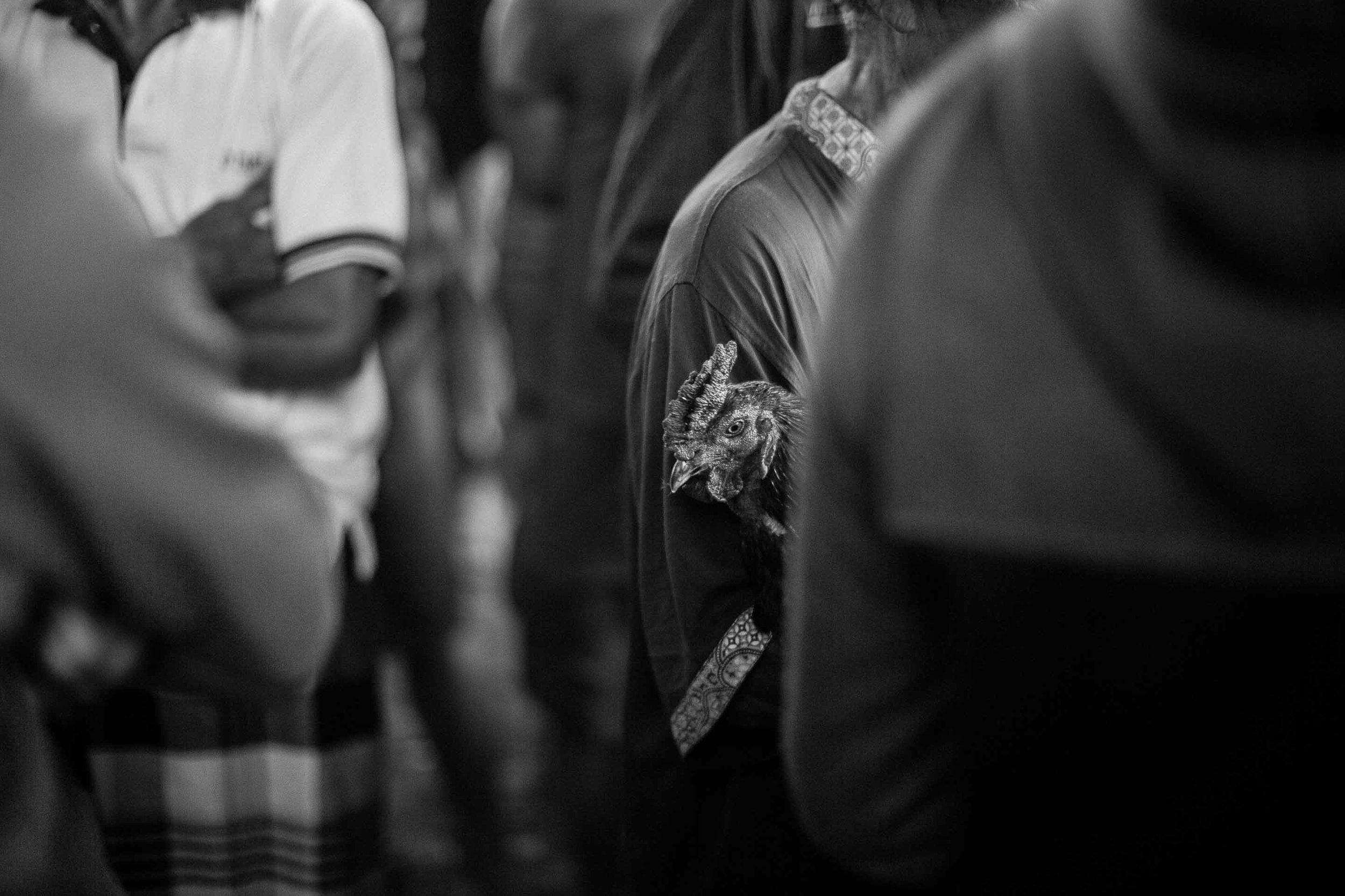 © Gareth Moon 2017 Tajen - Traditional cockfighting in Bali © Gareth Moon 2017