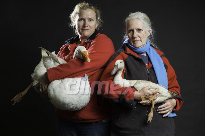 "Debbie Curtis (l) with Quackers and Lilian Coulton with Violet (r).  Lilian Coulton, ""I've been breeding birds seriously as a show person since the 1980's. I've always been interested in conservation of most wildlife of any kind so it was just a natural extension. First I got some just as pets, no showing, none of this. It just gradually progressed from there. How many ducks do I have now? About 60 and they all have names. I'm currently trying to re-create the magpie duck at the moment, it's a love and a passion."""