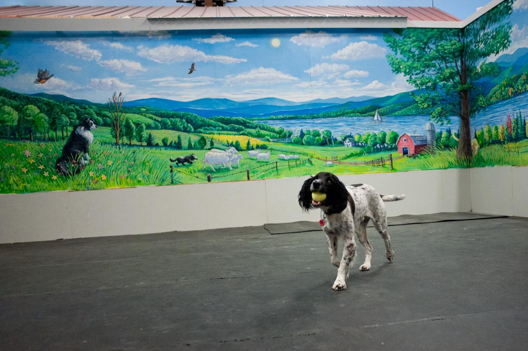 The mural at the Crate Escape, Too in South Burlington