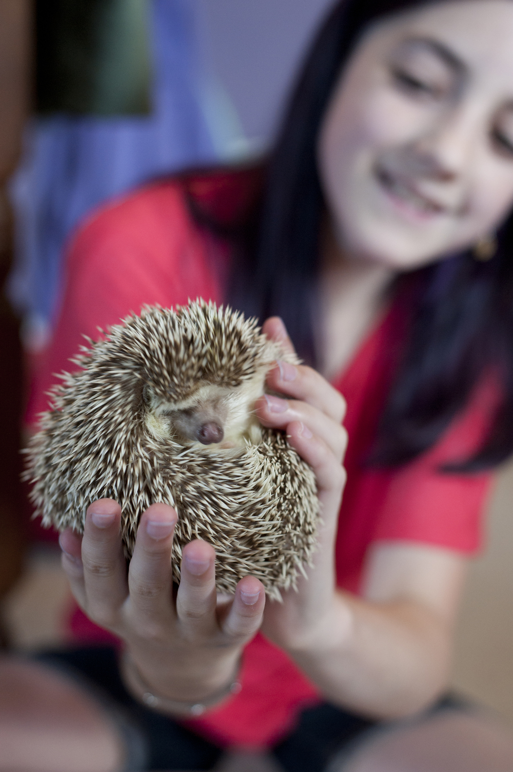 Livia Ball, 12, holds up her pet hedgehog, Bilbo, in her bedroom June 20, 2014. Ball has had Bilbo for almost a year and did a lot of research before her parents would let her get a hedgehog.