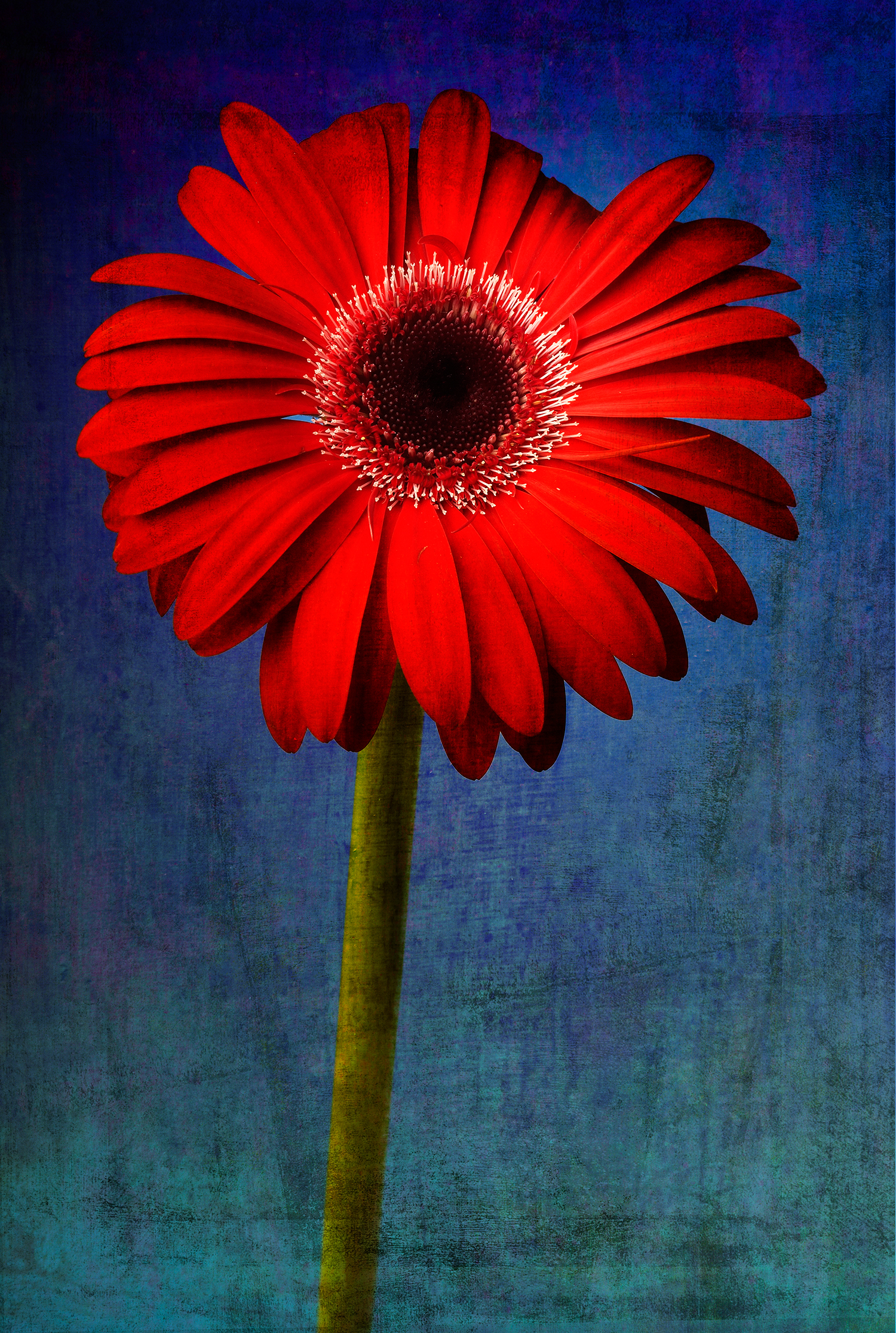 Flower 3b.jpg
