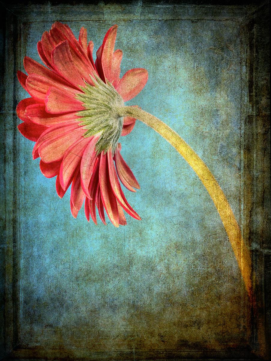 flower_7_c.jpg