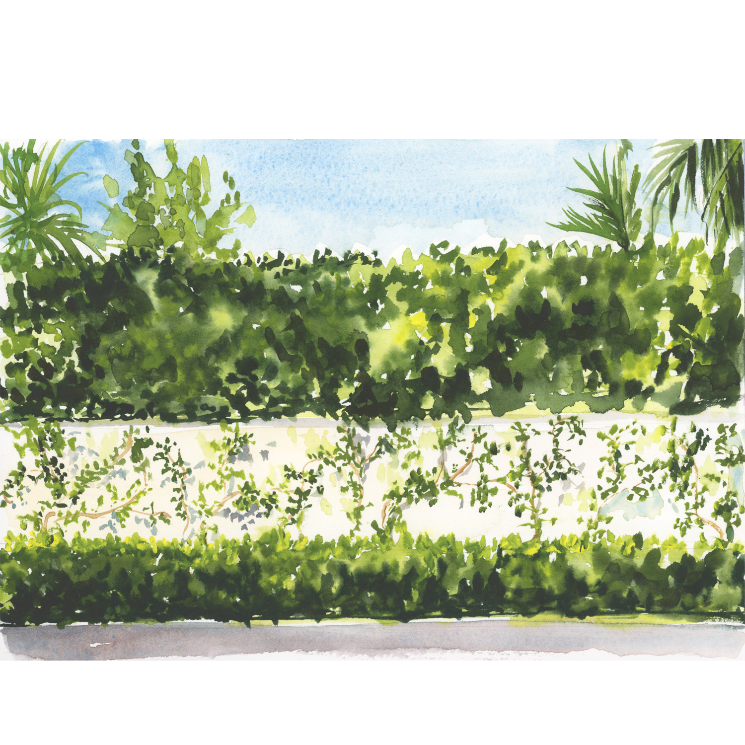 lydia-marie-elizabeth-palm-beach-collection-hedges