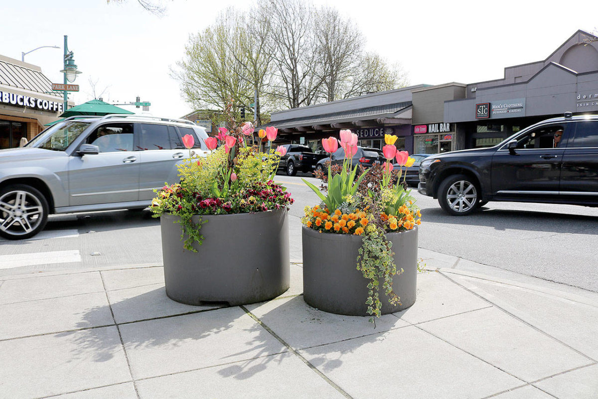 The Kirkland Downtown Association is once again looking for 40 individuals, families, or businesses that will adopt a flowerpot in downtown Kirkland through their Flower Pot sponsorship program. Each pot os $250 and includes a personalized plaque.