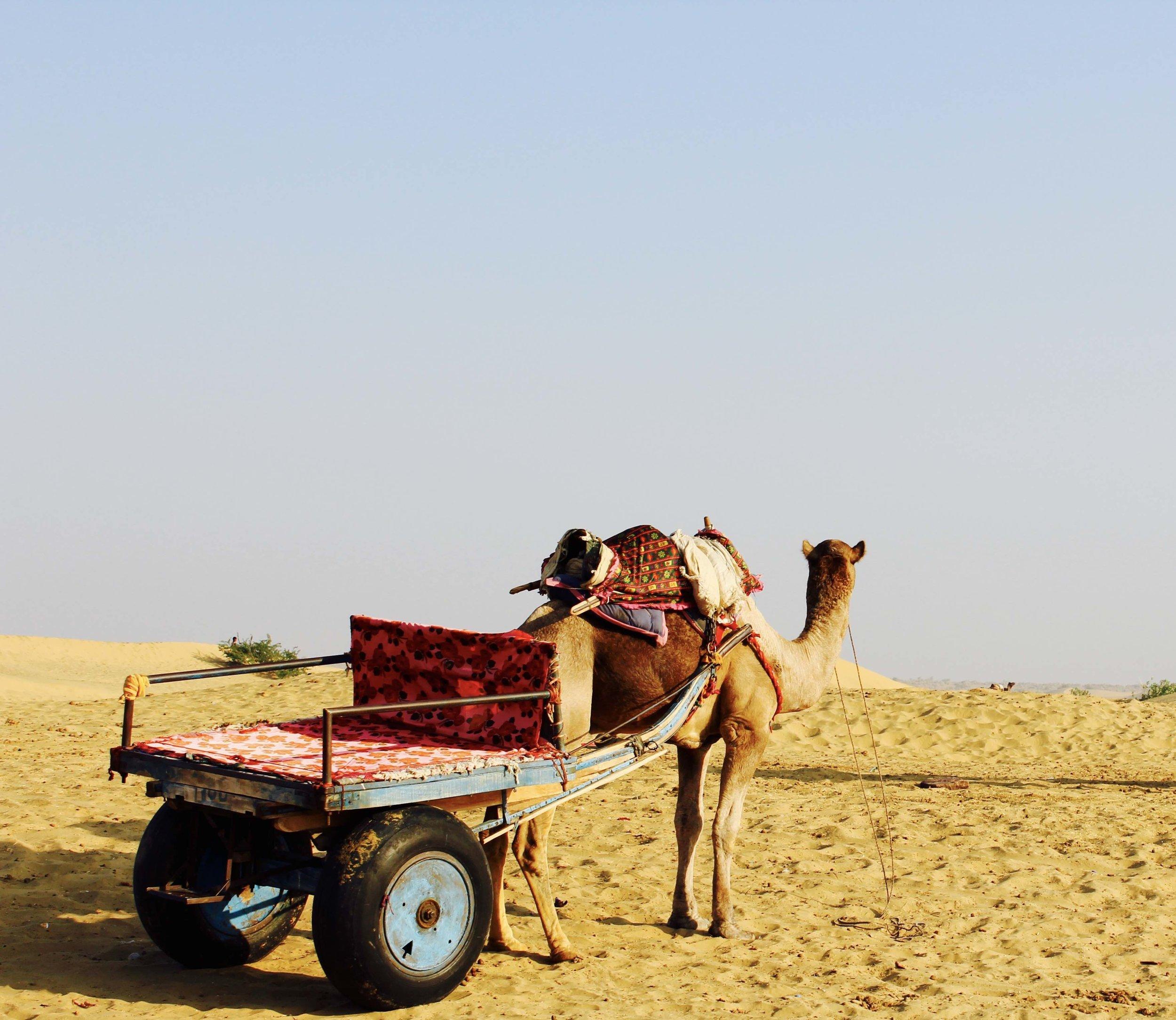 camel-1845780.jpg