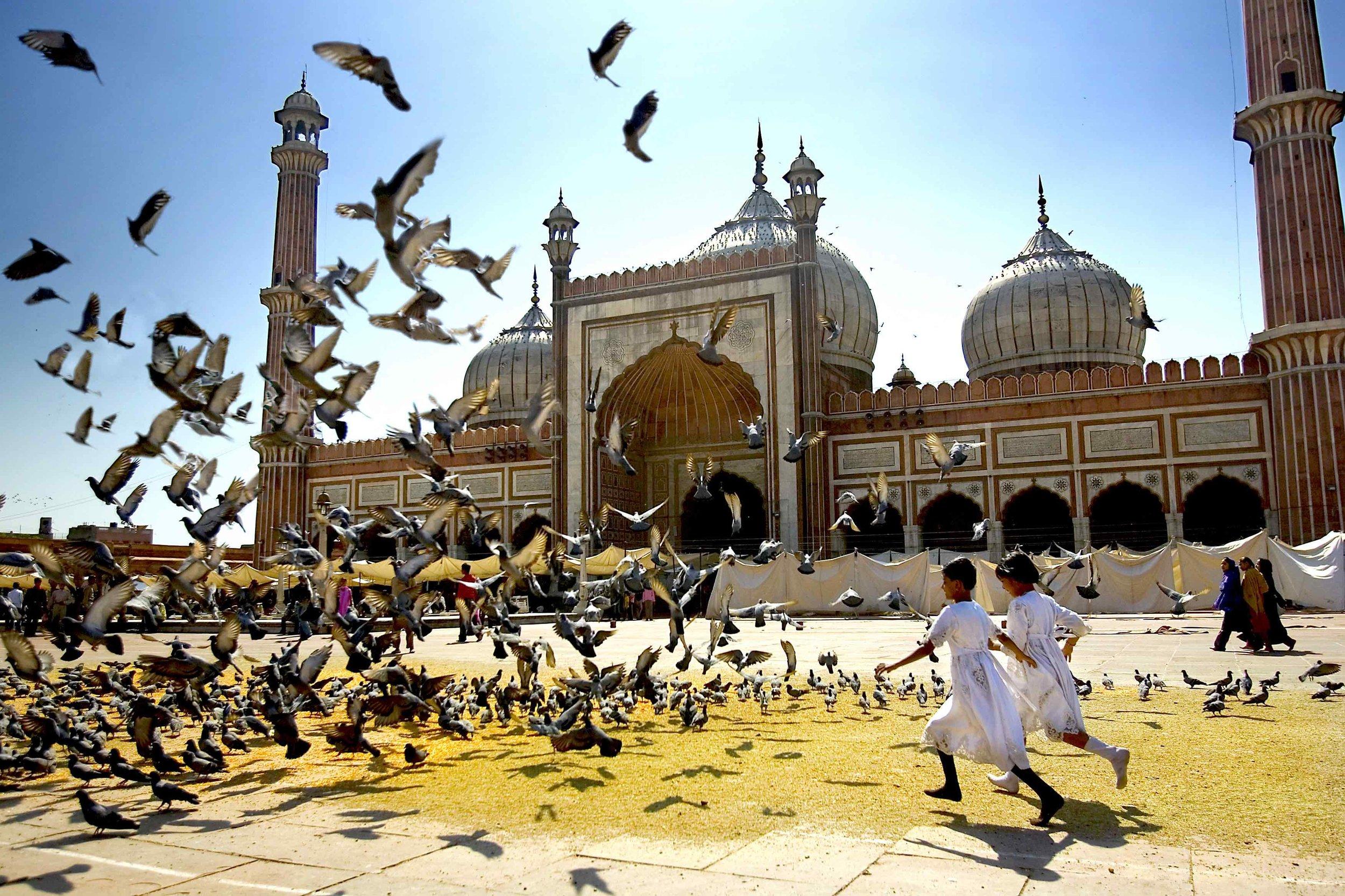 India_-_Delhi_girls_chasing_doves_-_6159 2.jpg