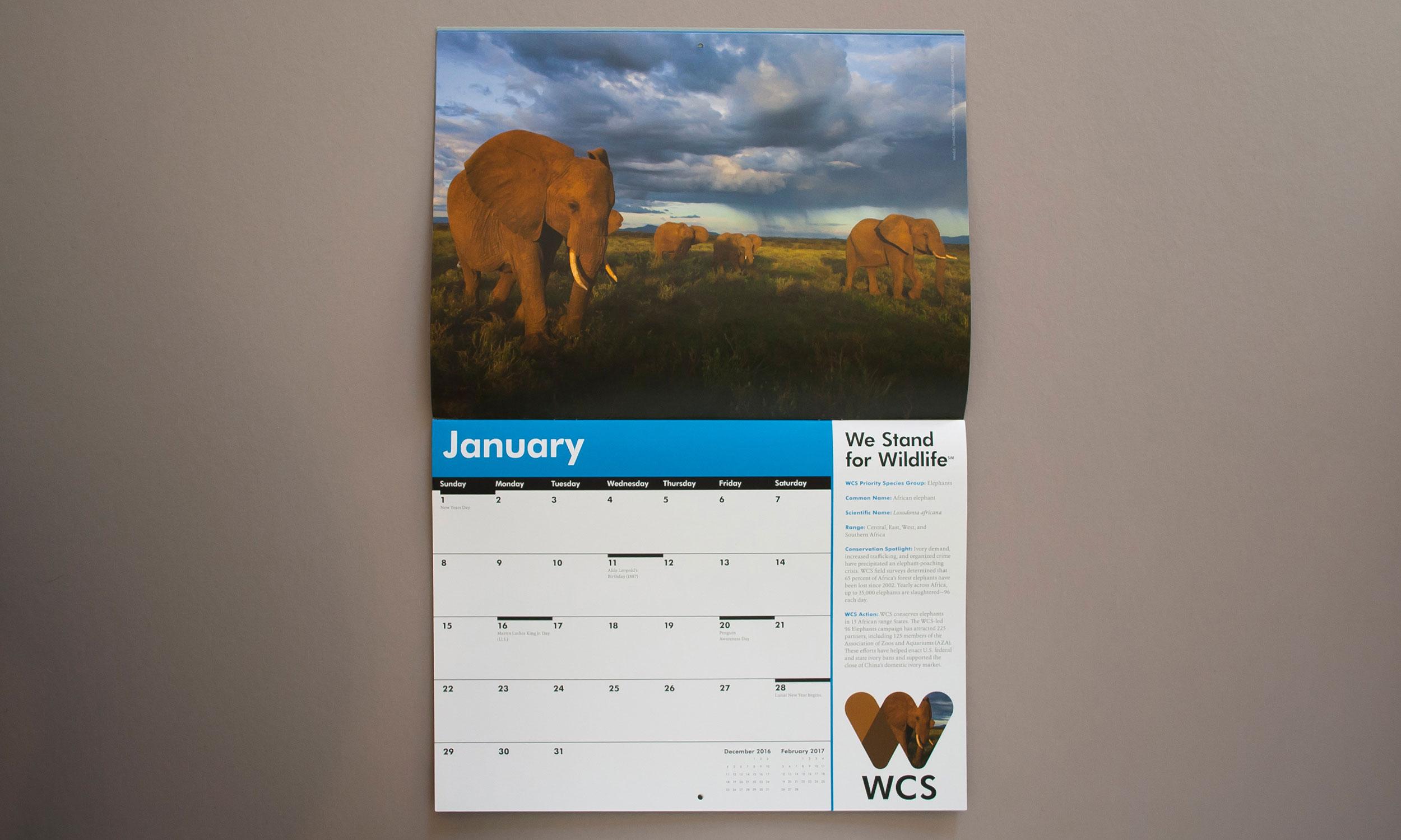 WCS-2017-Calendar_Web_January.jpg