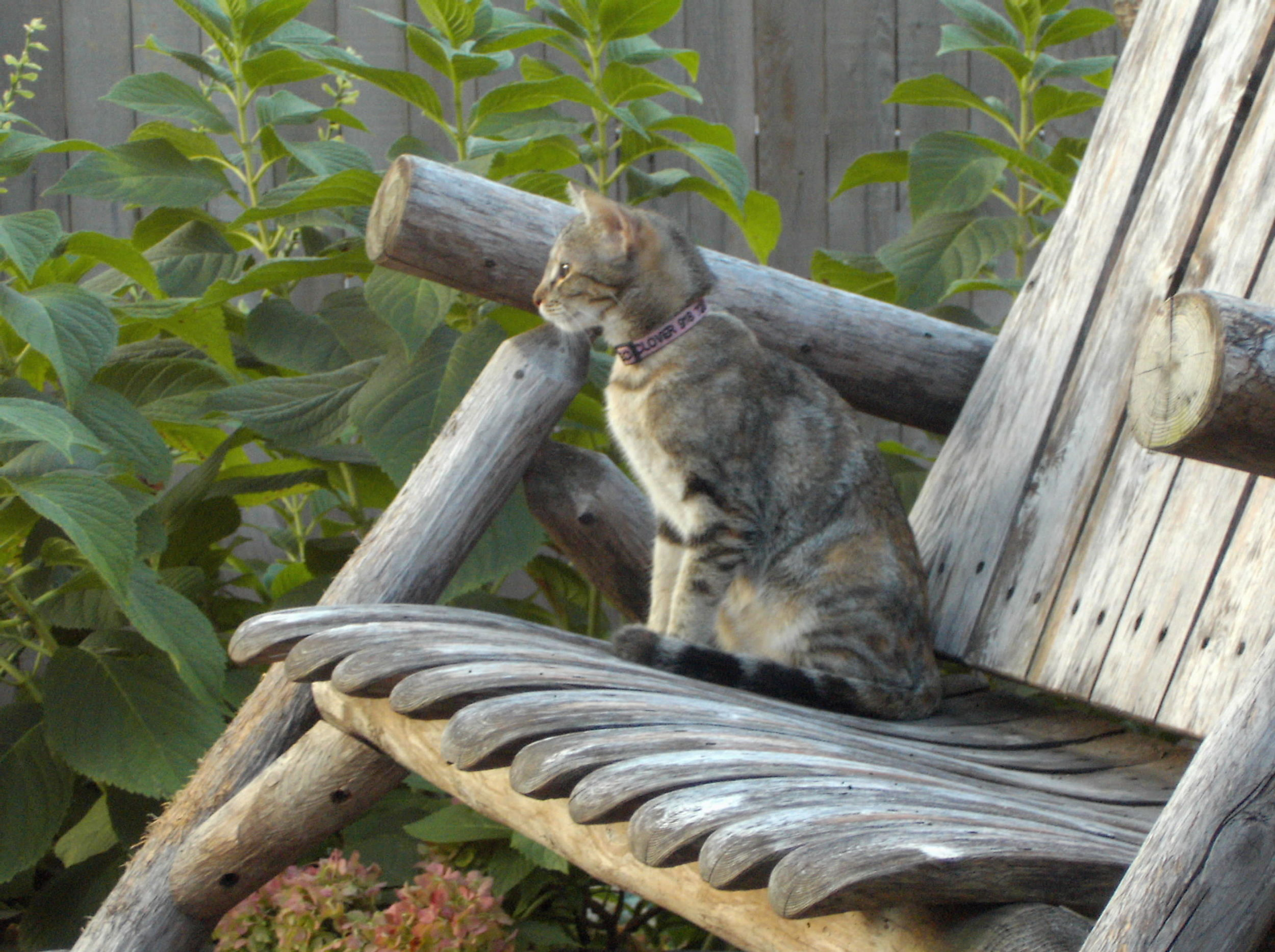 Cleo on deck rocker, 2009 (2).JPG