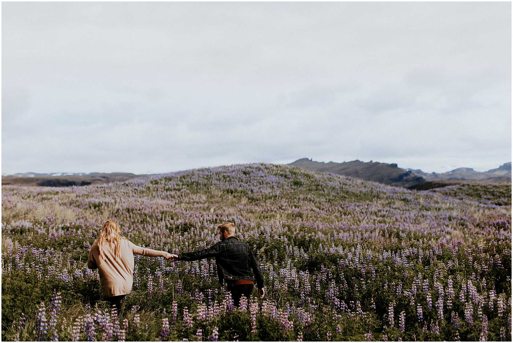 Anniversary shoot in the lupine fields in Iceland