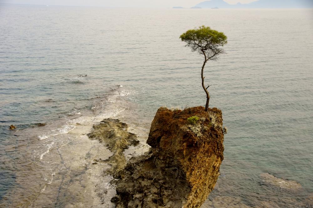 The Sublime:  Copyright  Falex  /  Shutterstock.com