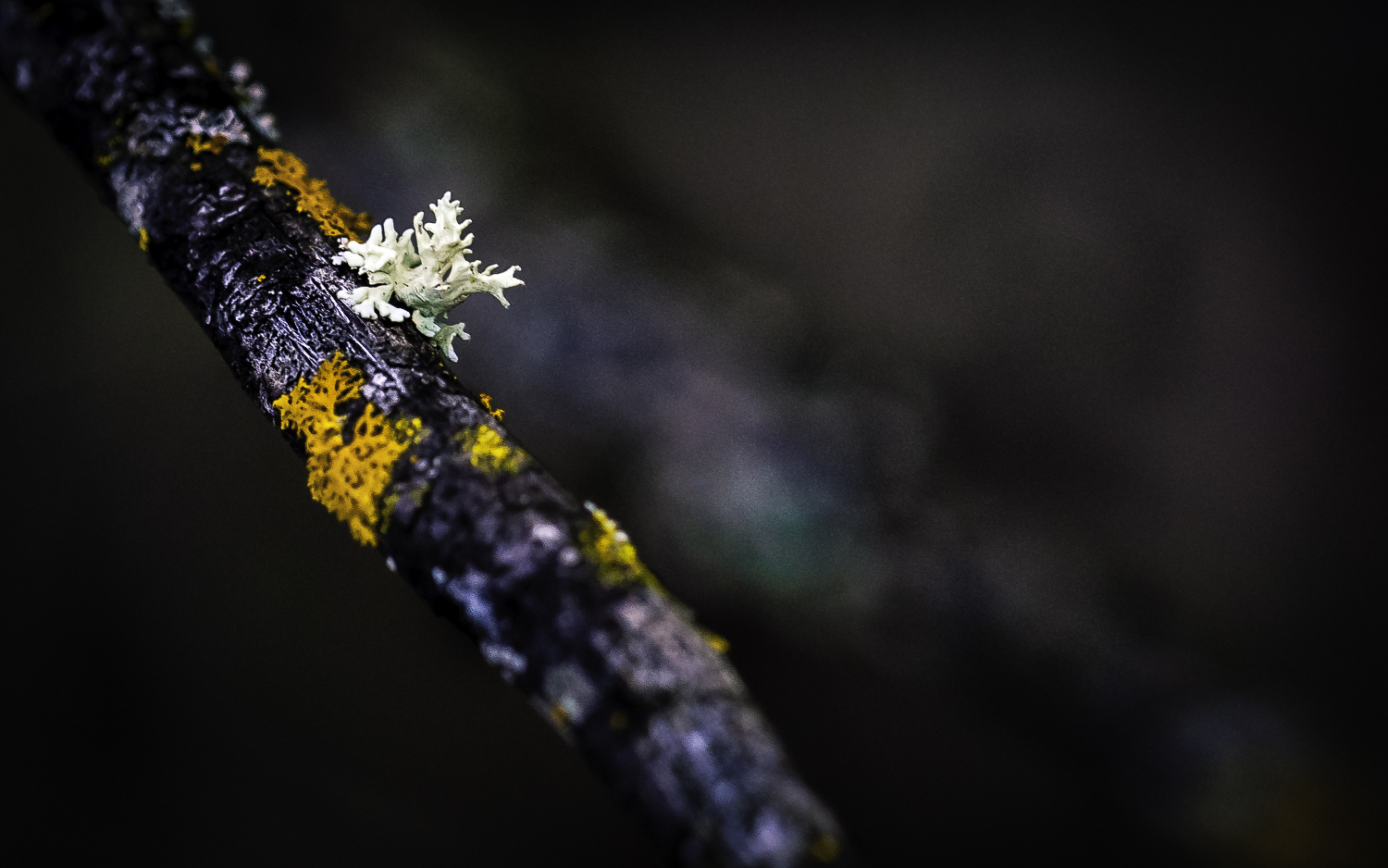 "Lichen"" ""Man Running Down Tree Limb"
