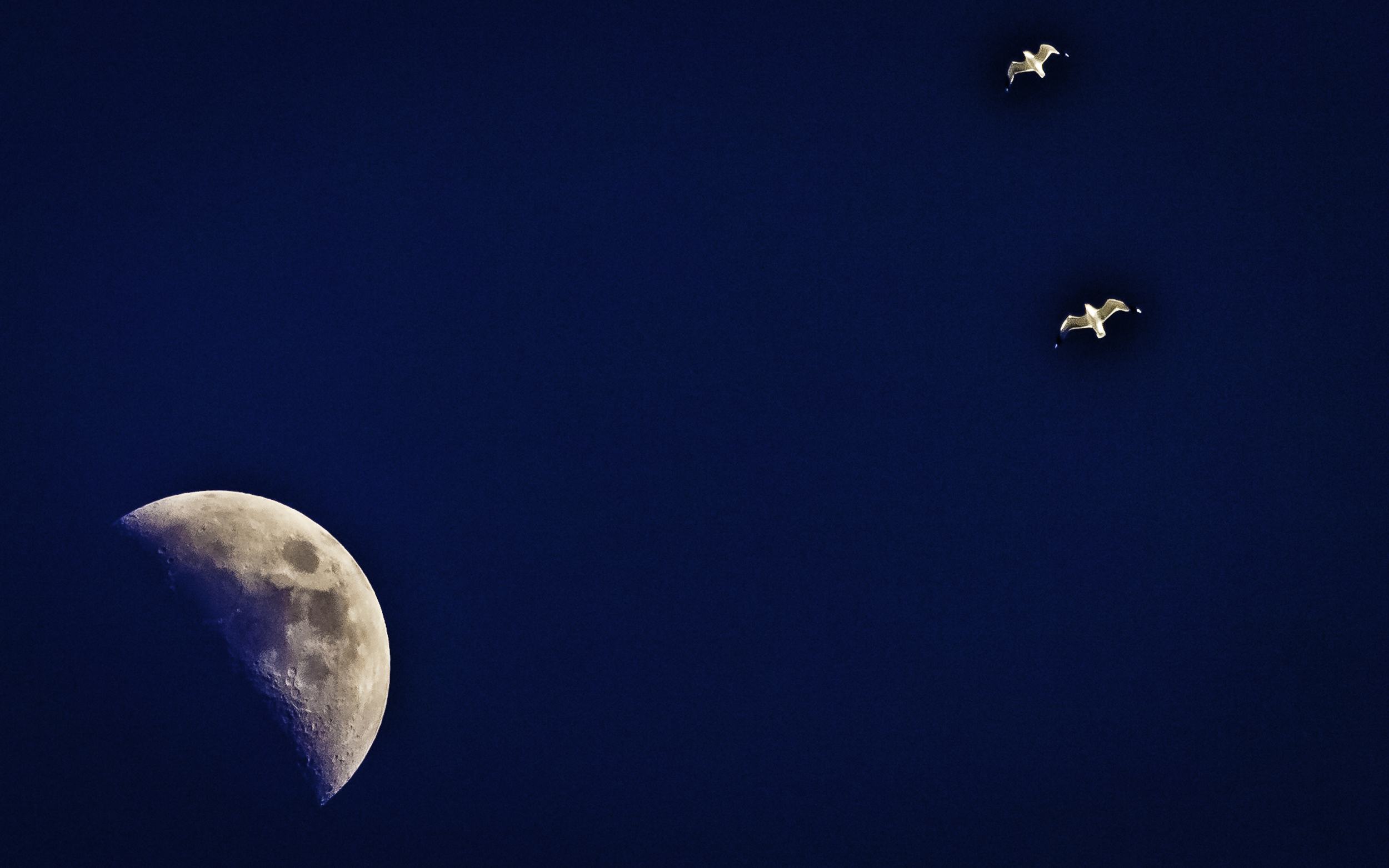 The Moon And Its Two Gull Friends Make a Handsome Threesome