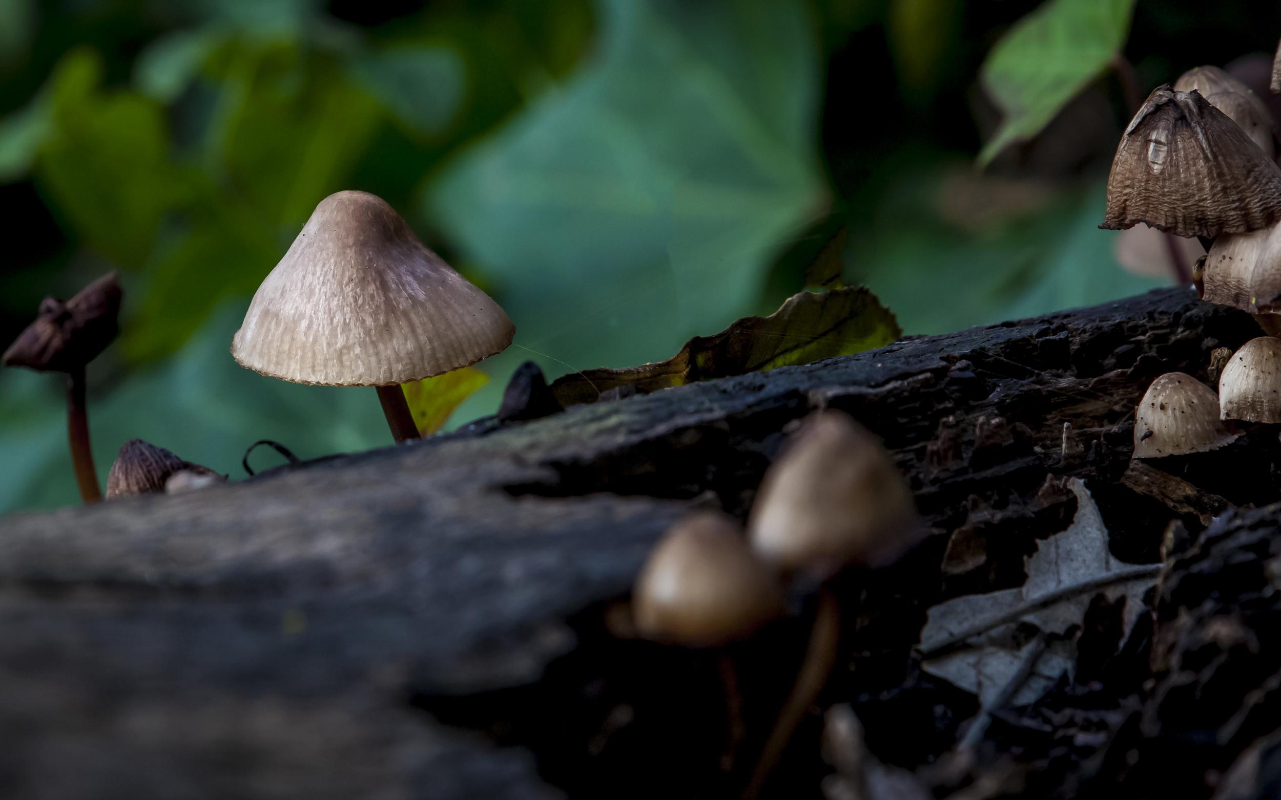 Mushrooms along Los Gatos creek trail west of Los Gatos California