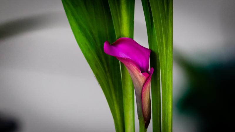 lilly on sun porch.jpg