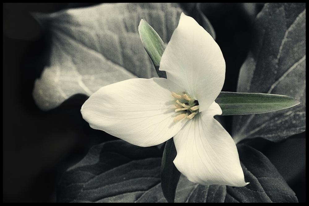 Flowers/Series of 15