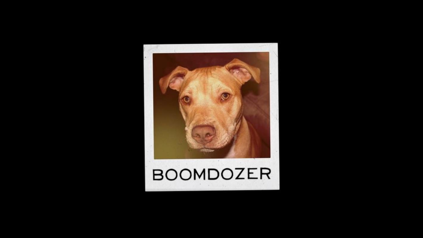 Meet Boomer, aka Boomdozer.      SVP, Development &Crazymaking.