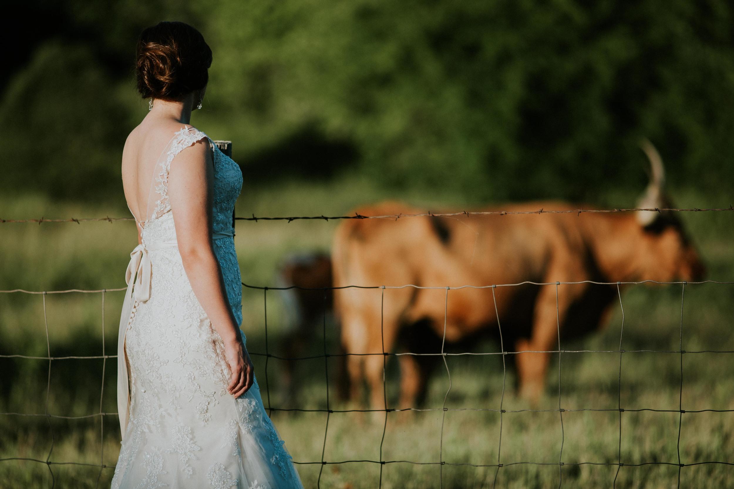 Texas Longhorn Bridal Portrait