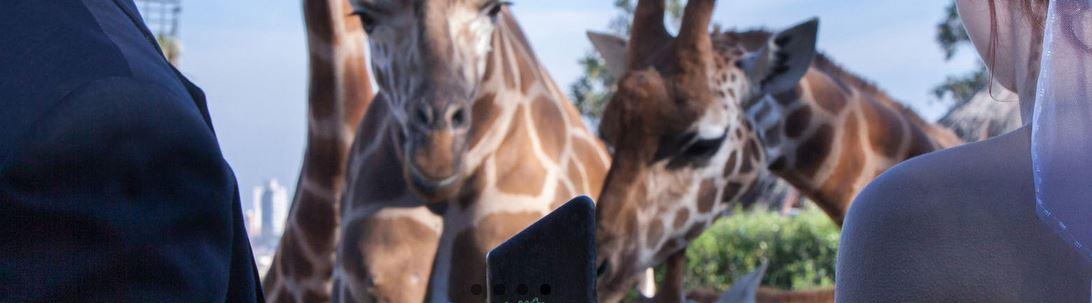 weddings taronga zoo