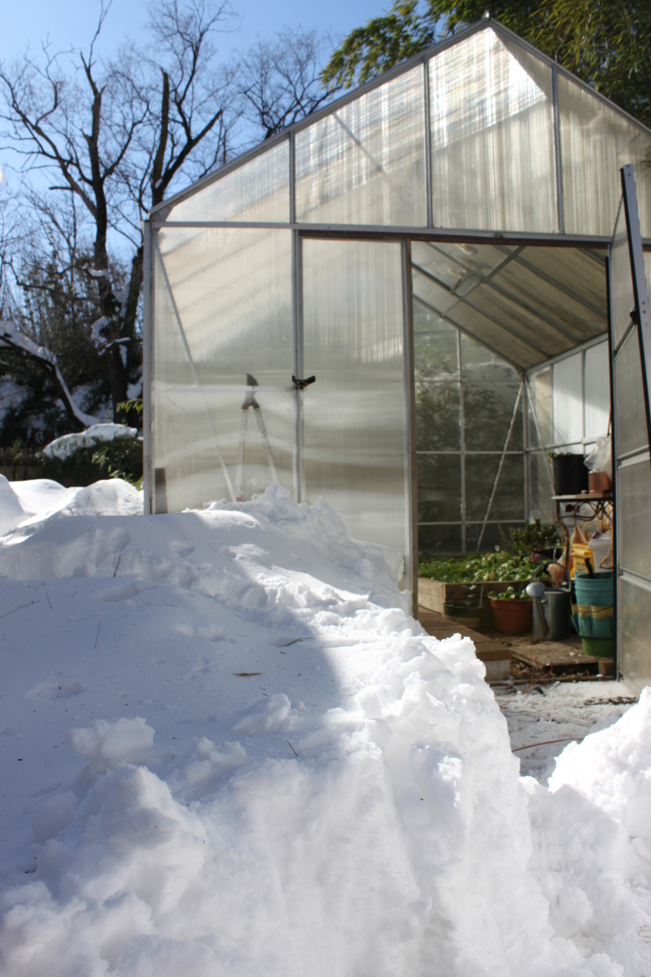 Winter Greenhouse.JPG