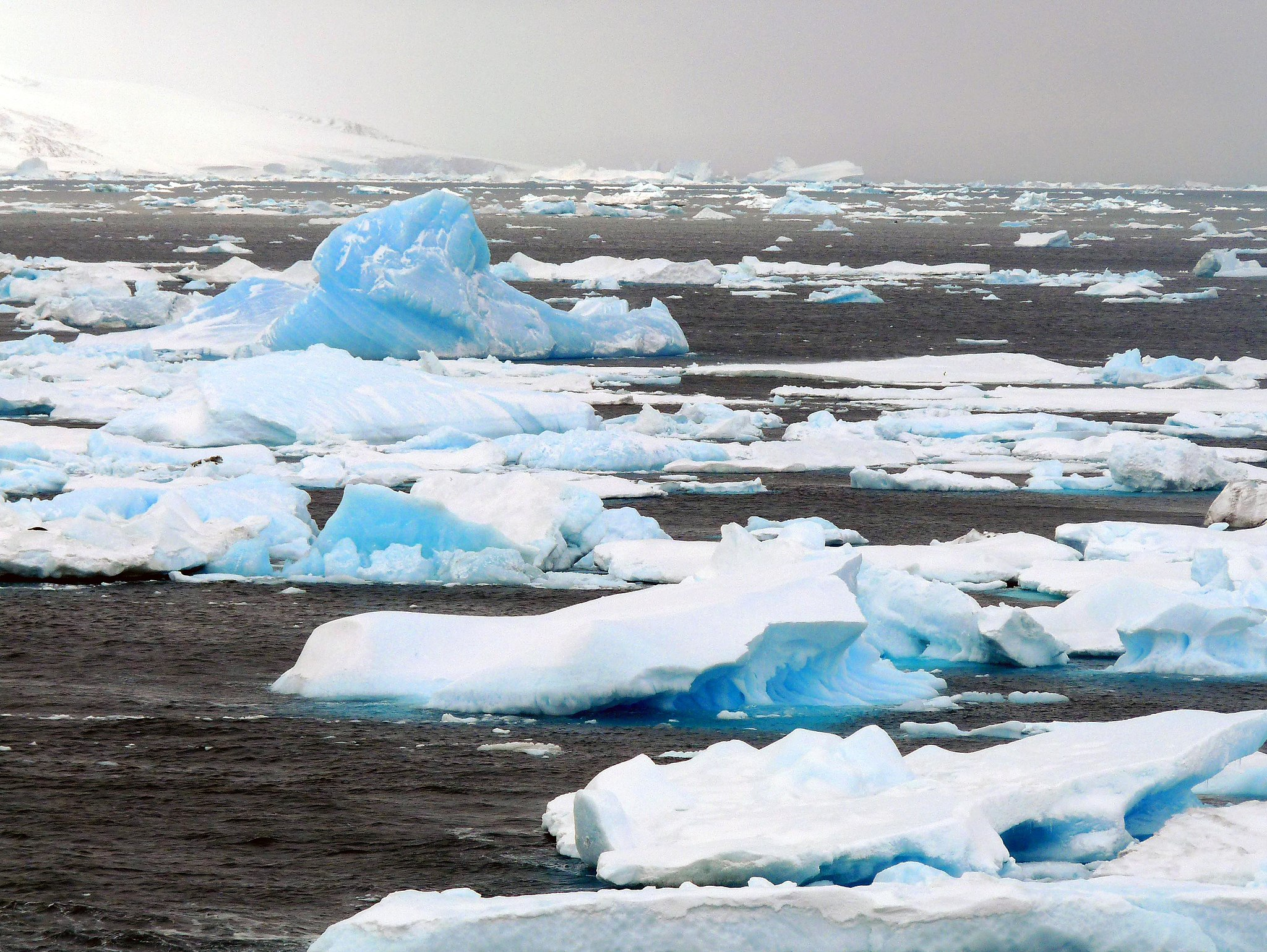 By michael clarke stuff (AP97 ice floes) [CC BY-SA 2.0 (https://creativecommons.org/licenses/by-sa/2.0)], via Wikimedia Commons
