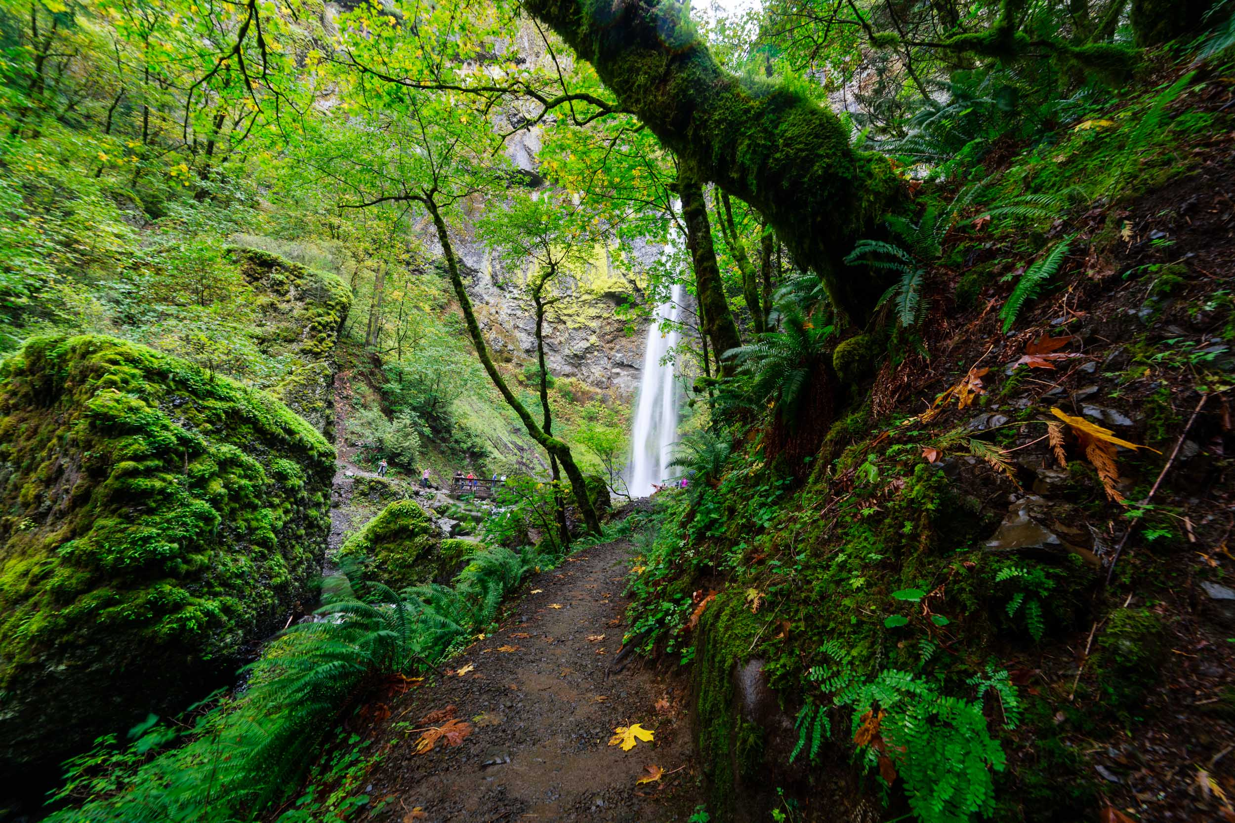 Rounding the lush trail to a view of Elowah Falls, OR