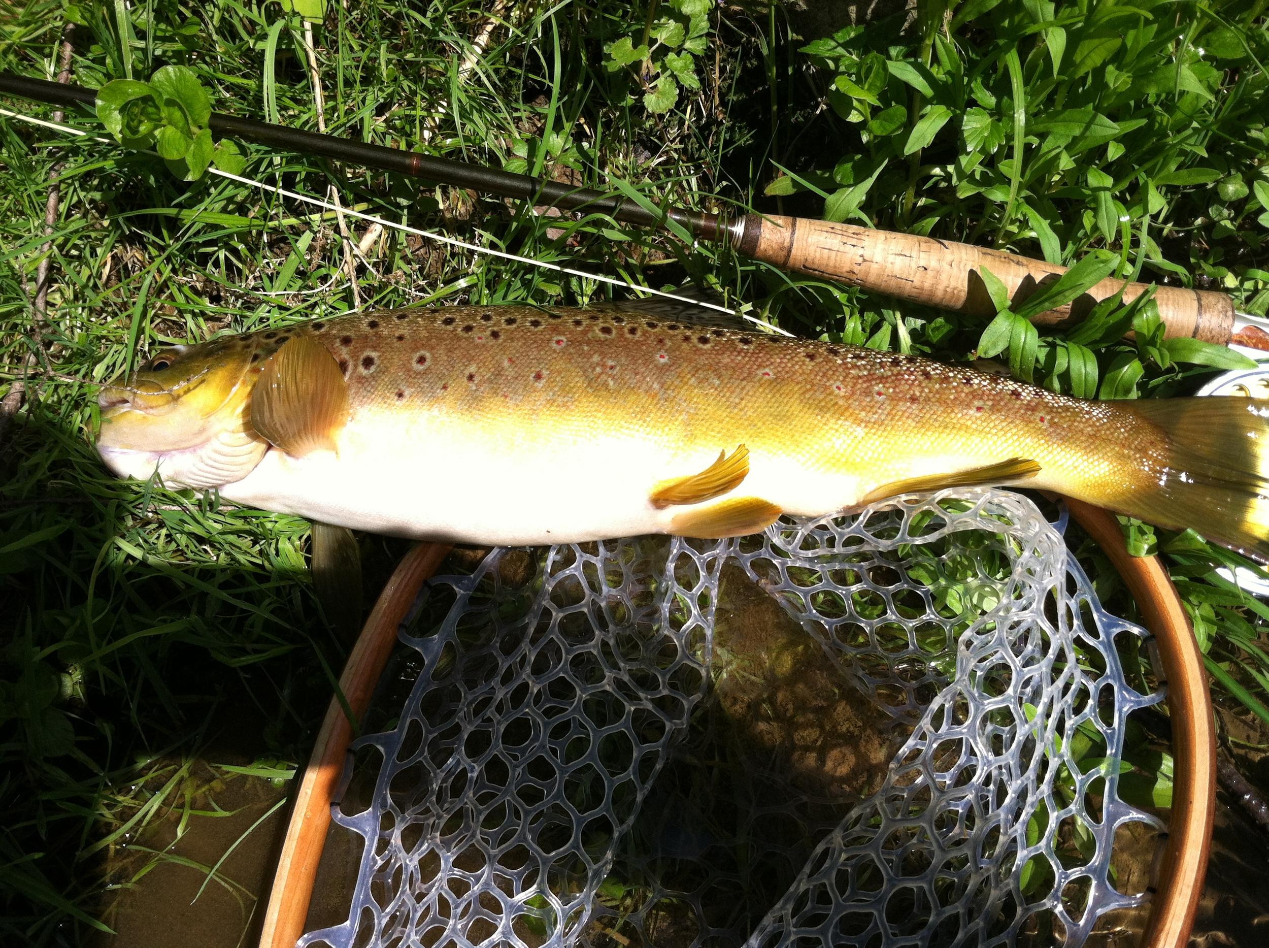 Big Fishing Creek