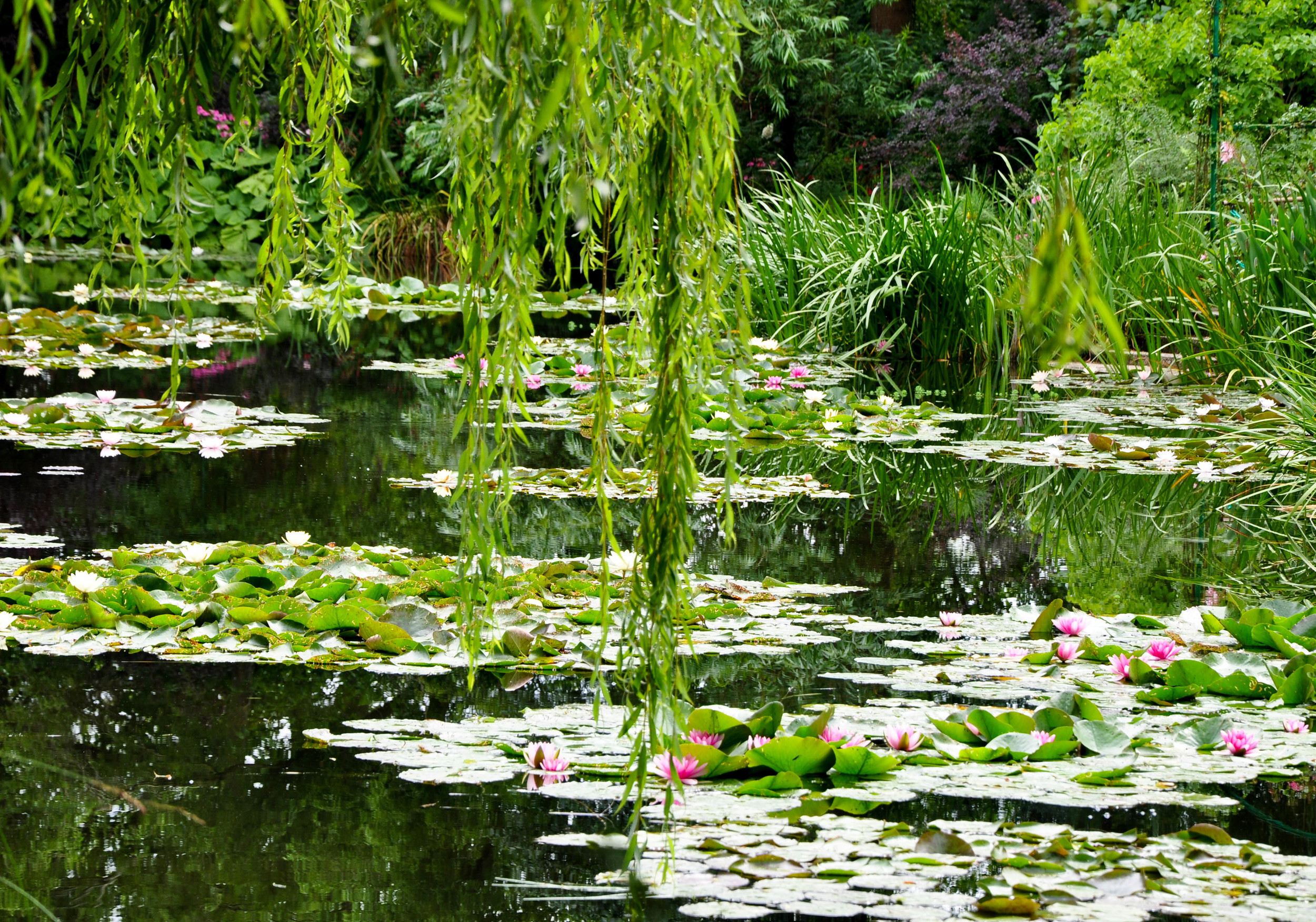Waterlily pond in Monet's garden at Giverny--One of our day trips from St. Witz  ©Copyright 2015Bridget Barnes