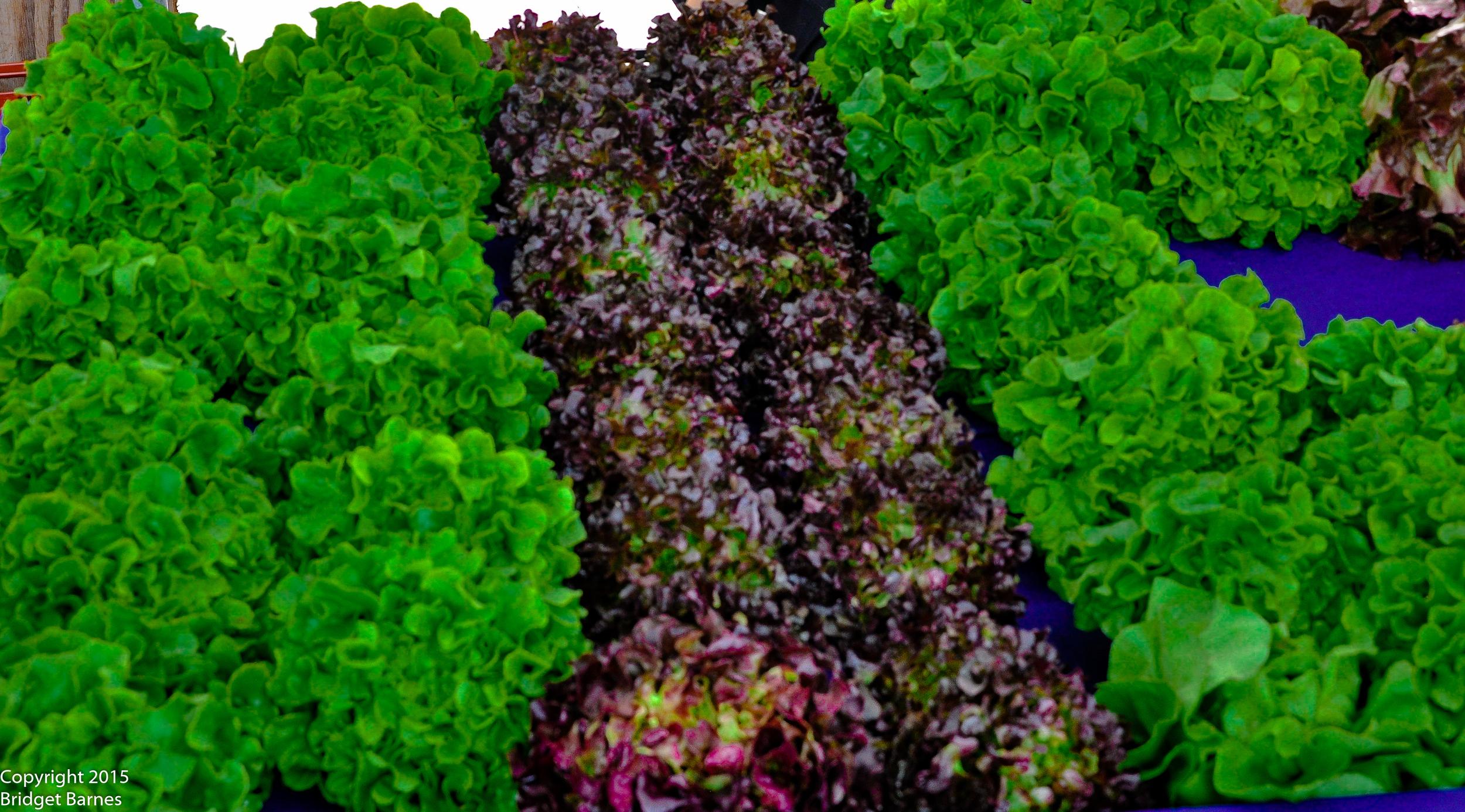 Lettuce at the Hollywood Farmers Market  ©Copyright 2015 Bridget Barnes