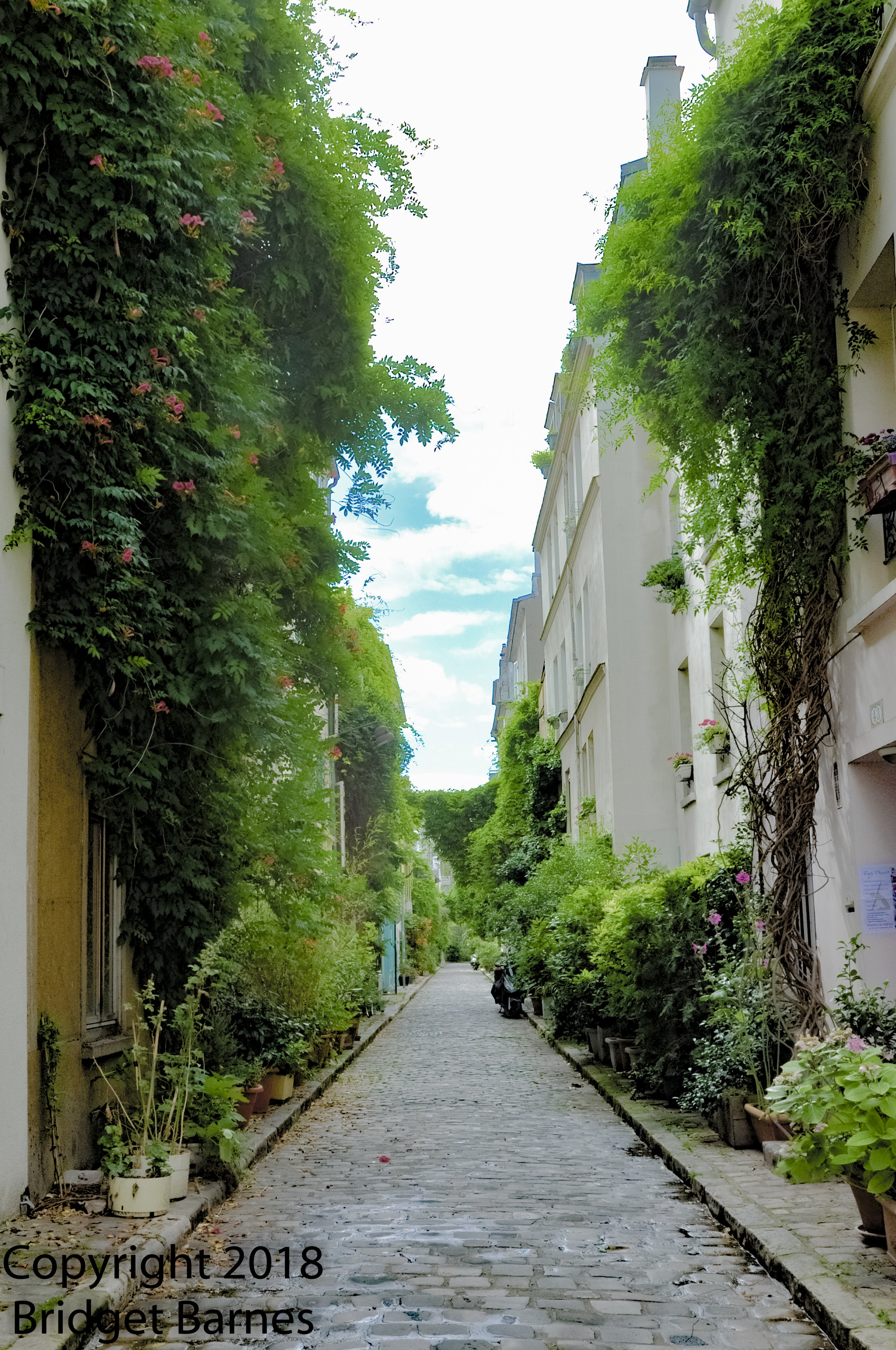Rue des Thermopyles is a touch of countryside in the middle of the city.