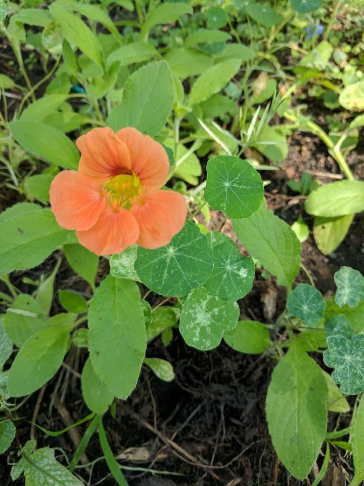 NCFA Garden.jpg