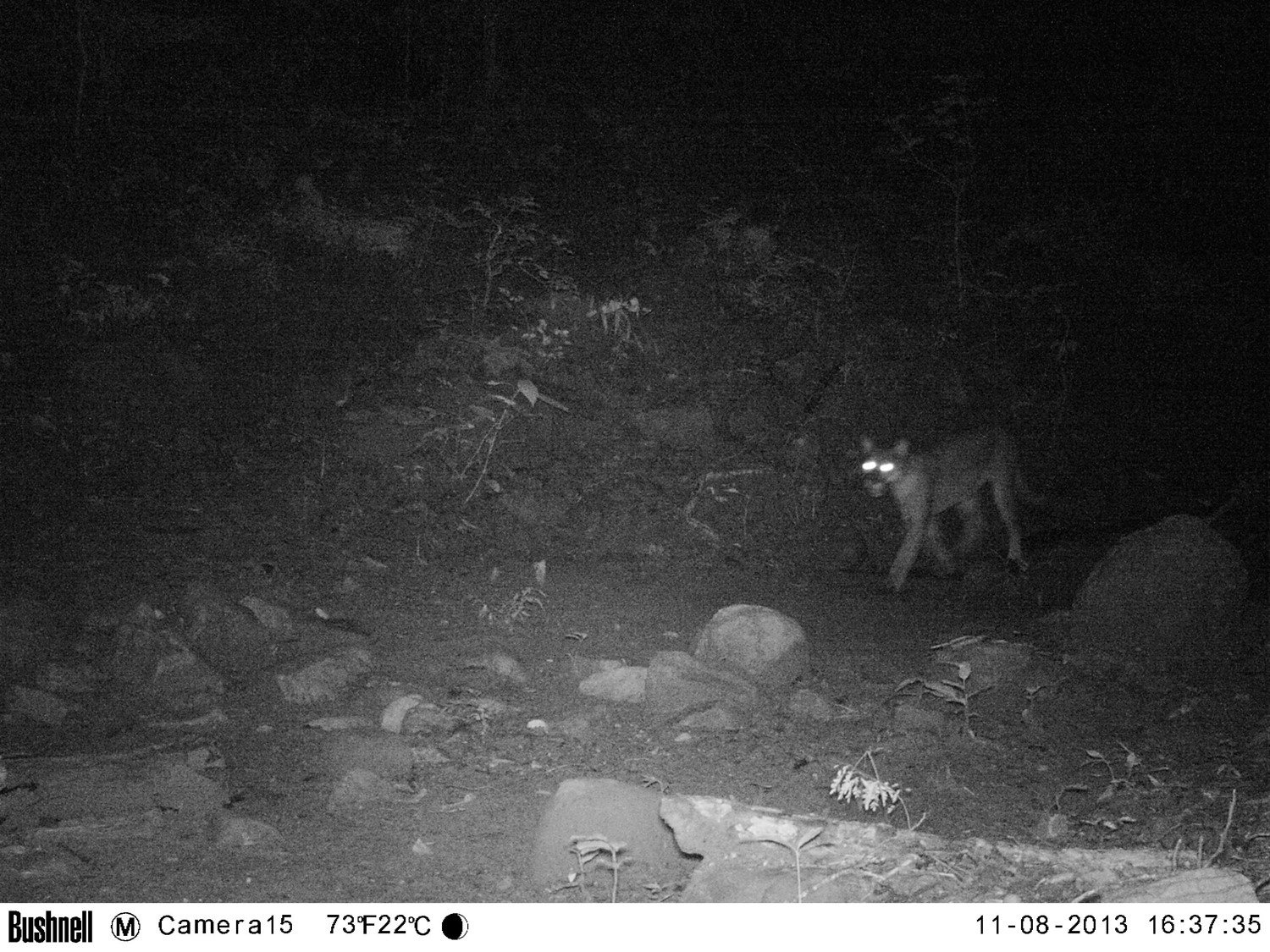 These photos were taken less than a week after we installed our camera traps, which provided a very positive start to our study.