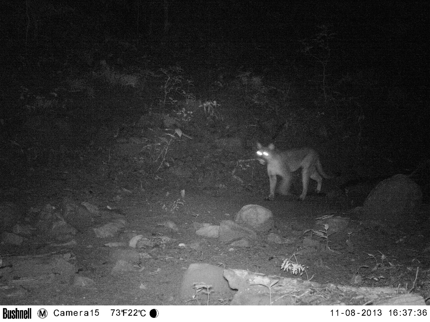 These photos were taken less than a week after we installed our camera traps, which provided a very positive start to our study/