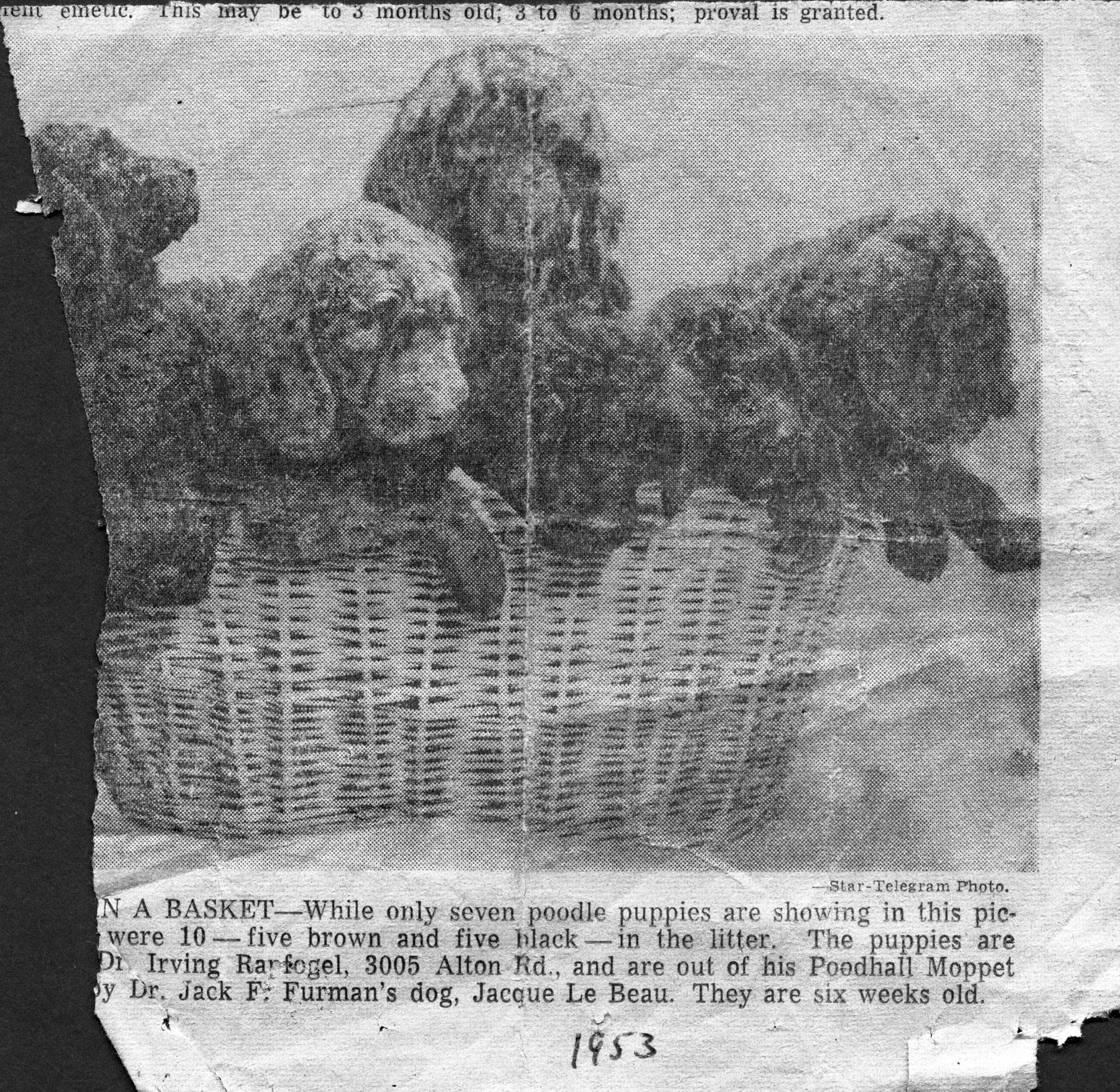 Mopsy Puppies_1953_1800px.jpg